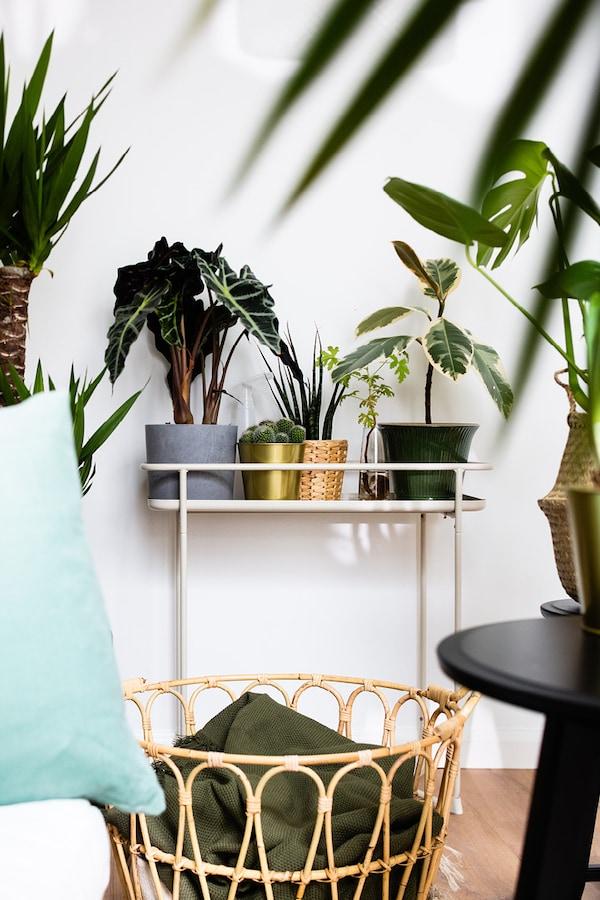 voor groene vingers: Een rotan mand en een plantenstandaard met bloempotten