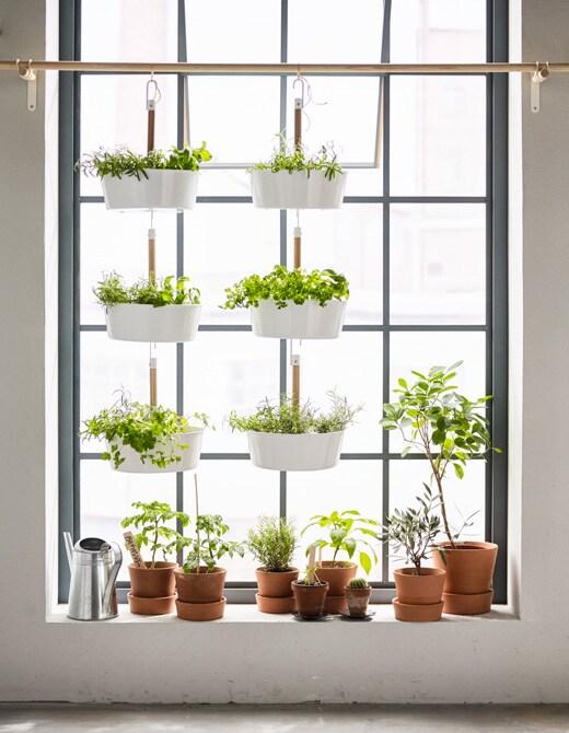 Vous rêvez d'un potager dans votre appartement? Allez au-delà de l'appui de fenêtre en suspendant des pots.