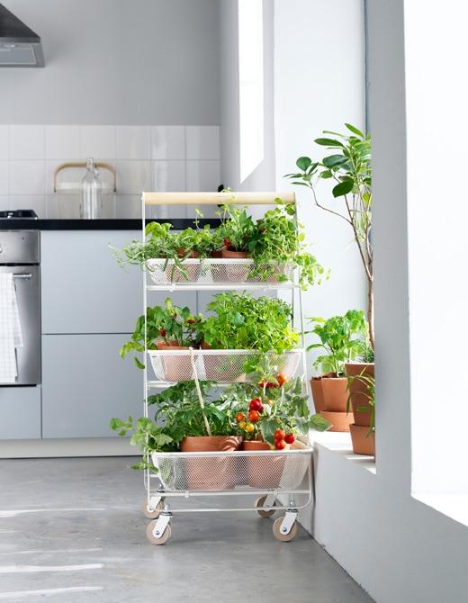 Vous rêvez d'un potager dans votre appartement? Au moyen d'une desserte, vous pouvez en aménager un mobile!