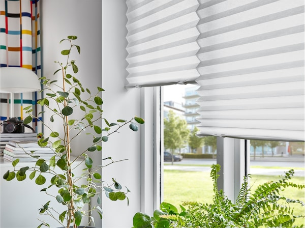 White pleated blinds are drawn halfway down two windows. Green plants in front and a white table lamp in the background.