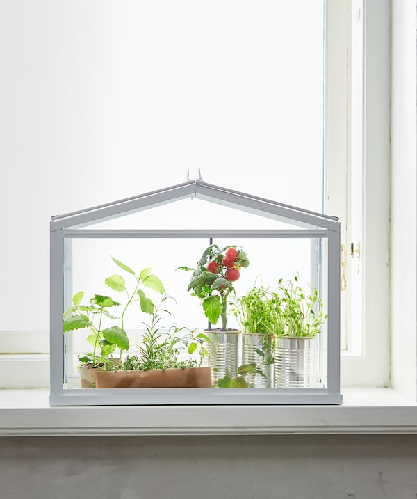 White SOCKER greenhouse filled with various green plants against a sunlit window.