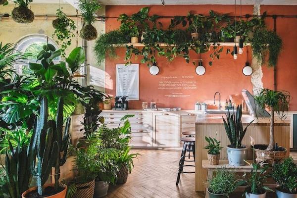 wnętrze domu jutra z dużą ilością roślinności