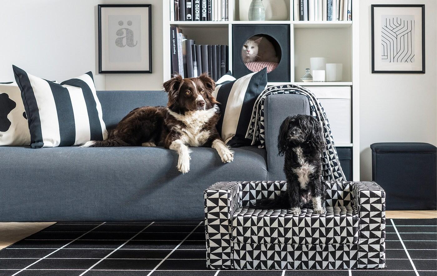 Wohnzimmereinrichtung, u. a. mit einem Hundebett, in dem ein Hund sitzt. Auf dem Sofa liegt ein weiterer Hund und aus einem Regal schaut eine weisse Katze hervor.