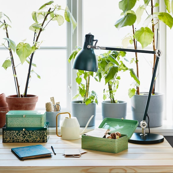 Wooden desk with a blue ANILINARE notebook, ANILINARE metal boxes and plants near a window.