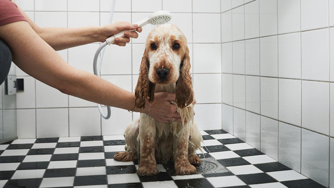 Zaskočeného psa niekto sprchuje pomocou ručnej sprchovej hlavice.