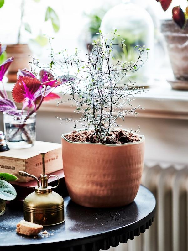 Зеленое растение виднеется в керамическом горшке, который стоит на небольшом круглом столе. Рядом лежат садовые принадлежности.