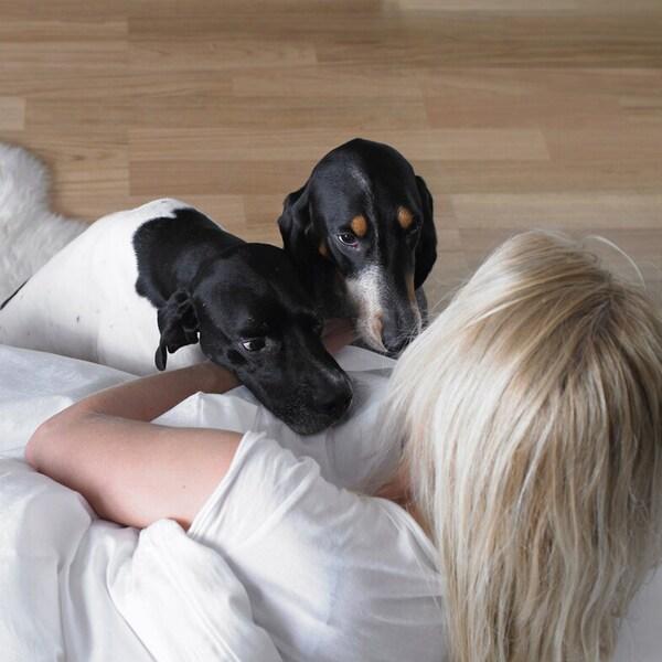 Женщина лежит на кровати, рядом с ней две собаки