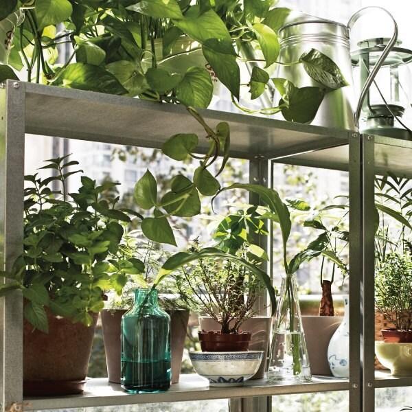 Zielona oaza w IKEA Kraków. Zaproś do domu rośliny, a poczujesz się lepiej.