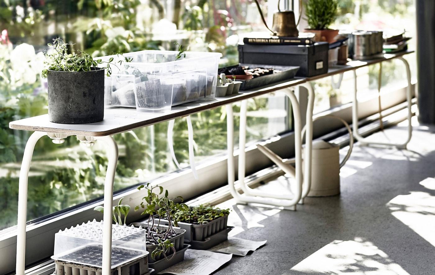 Zimmerpflanzen auf einer weißen Holzbank vor einem Fenster