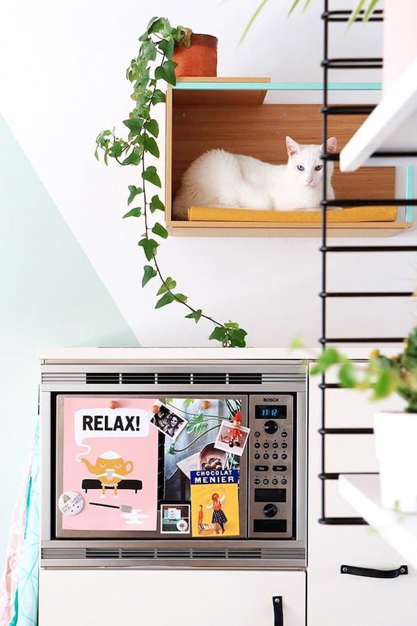 Zitplek voor kat aan de muur