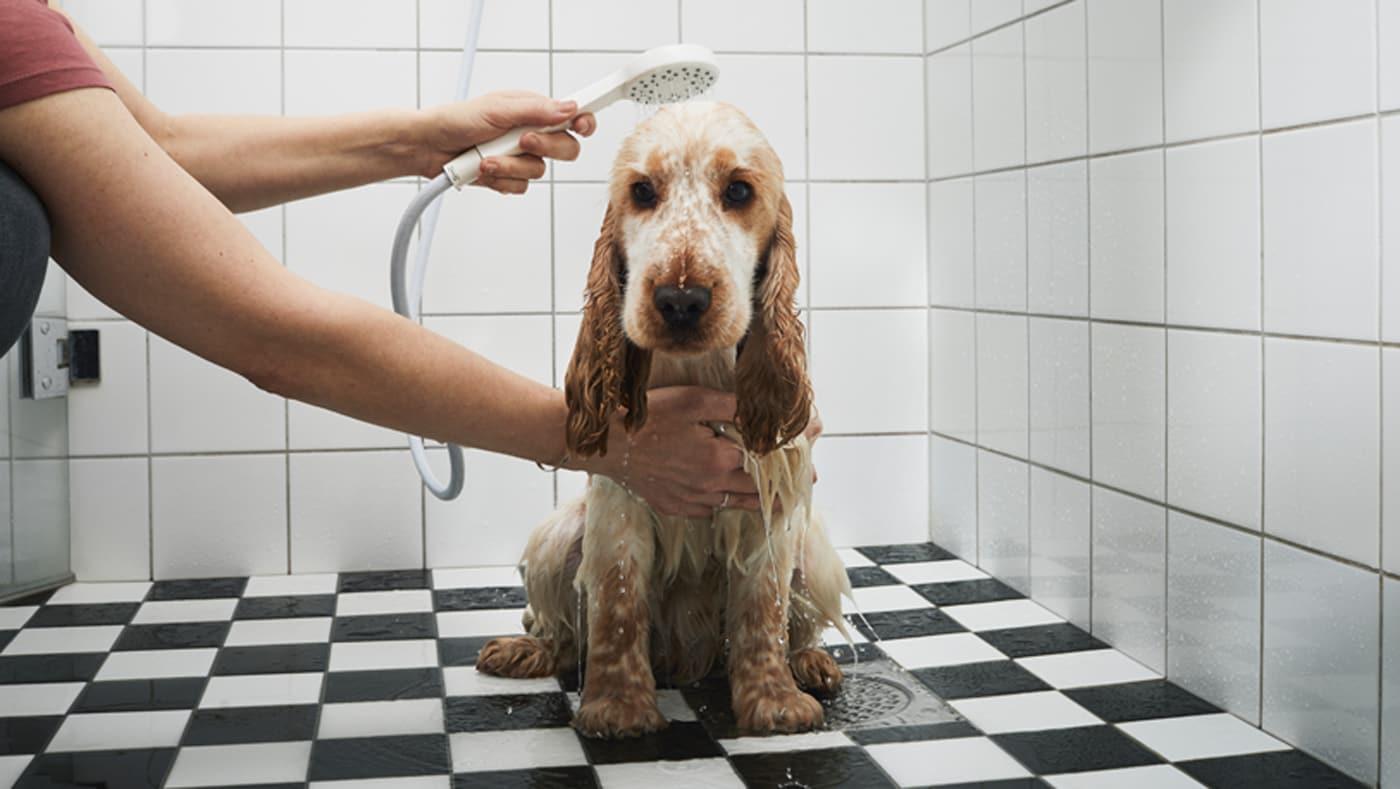 Zmatený pes je sprchován pomocí ruční sprchové hlavice.