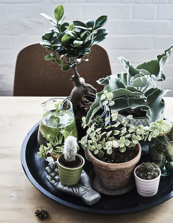 indoor garten ideen sommer das ganze jahr ikea ikea. Black Bedroom Furniture Sets. Home Design Ideas