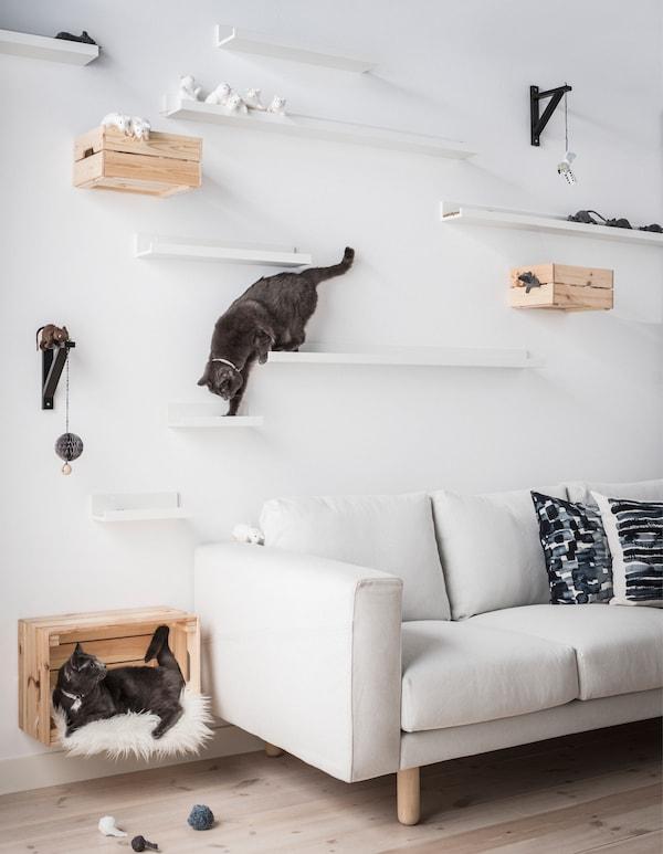 Zwei Katzen auf selbst gemachten Katzenregalen aus IKEA MOSSLANDA Bilderleisten in Weiss in verschiedenen Abständen und Höhen an der Wand hinter einem Sofa