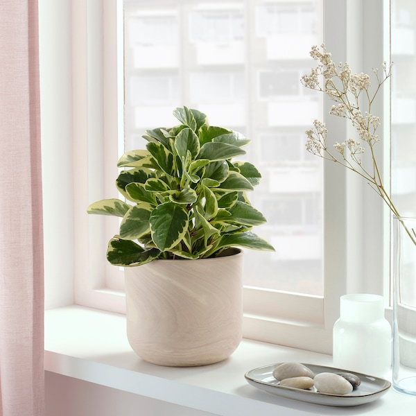 BACKSMULTRON Plant pot, in/outdoor beige/grey, 15 cm