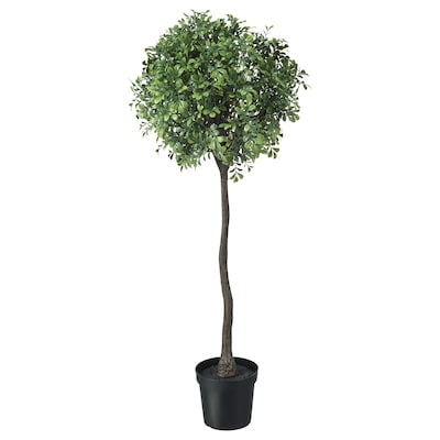 FEJKA Artificial potted plant, in/outdoor/Box stem, 15 cm