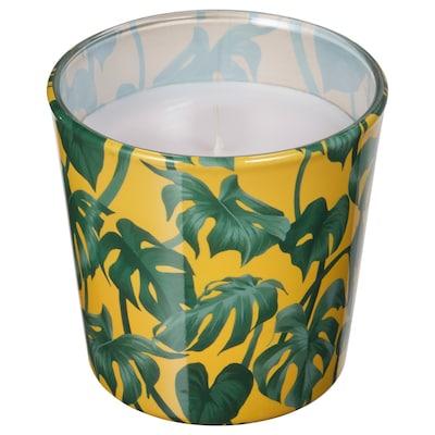 AVLÅNG candela senza profumo con vetro Monstera/foglia verde 7.5 cm 8 cm 25 h