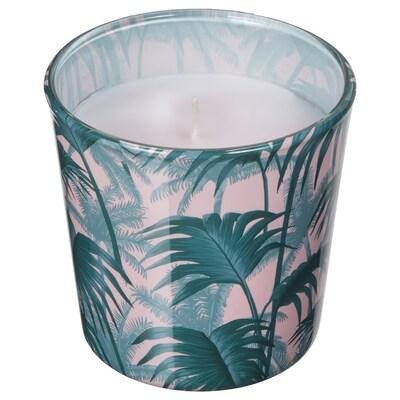 AVLÅNG candela senza profumo con vetro foglia di palma verde 7.5 cm 8 cm 25 h