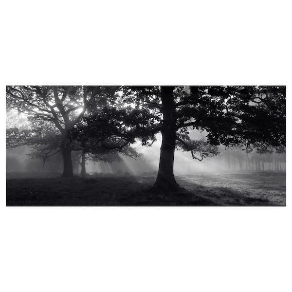 BJÖRKSTA Canvas, luce tra gli alberi II, 140x56 cm