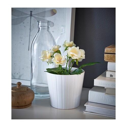 Confezionare Piante In Vaso : Ikea rimini idee regalo e bomboniere
