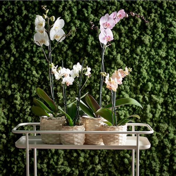 KRYDDPEPPAR Piedistallo per piante, da interno/esterno beige, 65 cm
