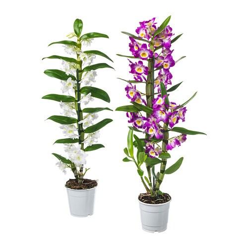 Orchidaceae pianta da vaso ikea for Vasi da giardino ikea