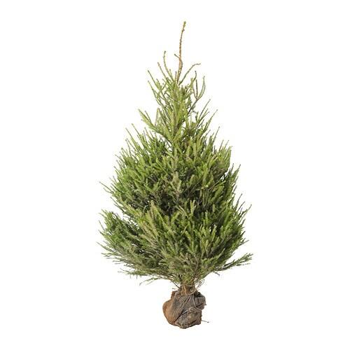 picea albero di natale ikea