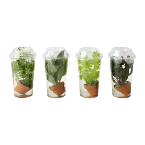 Vattenrall pianta acquatica ikea - Porta piante ikea ...