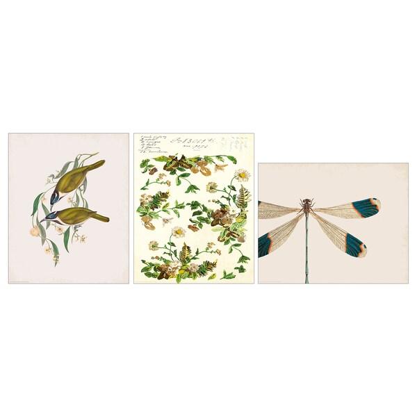 BILD صورة حشرة اليعسوب 40 سم 50 سم 3 قطعة