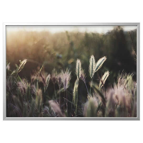 BJÖRKSTA Picture with frame, glowing sunset/aluminium-colour, 140x100 cm