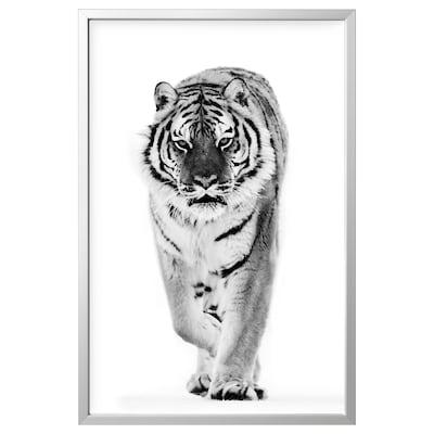 BJÖRKSTA Picture with frame, tiger/aluminium-colour, 78x118 cm