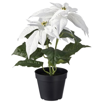 FEJKA Artificial potted plant, in/outdoor Poinsettia/white, 12 cm