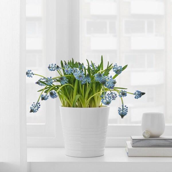 MUSKOT Plant pot, white, 12 cm