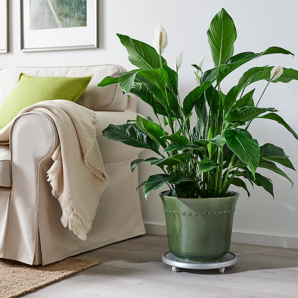 SHARONFRUKT آنية نباتات, داخلي/خارجي أخضر, 24 سم