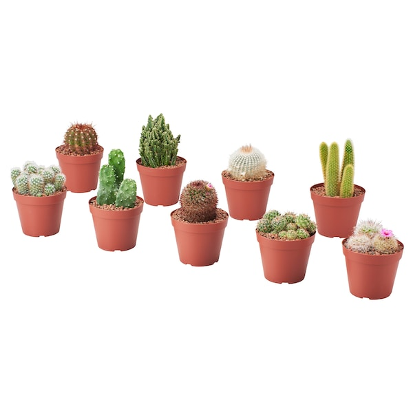 CACTACEAE Potted plant, assorted, 9 cm