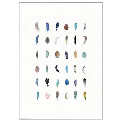 BILD ビルド ポスター, カラフルな羽, 50x70 cm