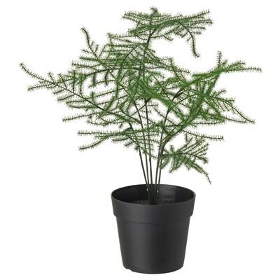 FEJKA フェイカ 人工観葉植物, 室内/屋外用 アスパラガス, 9 cm