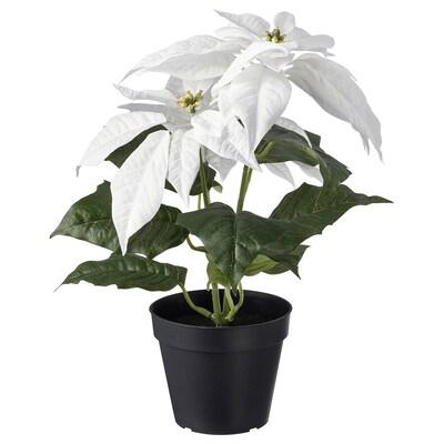 FEJKA フェイカ 人工観葉植物, 室内/屋外用 ポインセチア/ホワイト, 12 cm