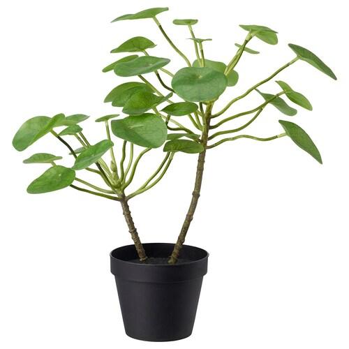フェイカ 人工観葉植物 室内/屋外用 ピレア 12 cm 40 cm