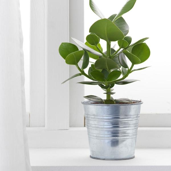 SOCKER ソッケル 鉢カバー, 室内/屋外用/亜鉛メッキ, 12 cm
