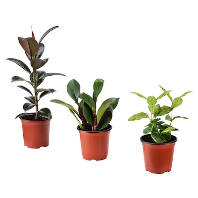 BLADVERK Potted plant, assorted, 10 cm