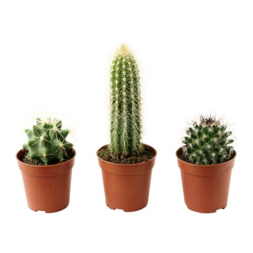 Cactaceae Potted Plant Ikea