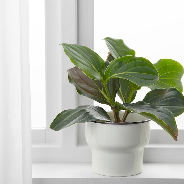 CITRONSYRA Plant pot, in/outdoor/white, 15 cm