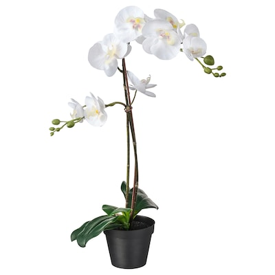FEJKA Artificial potted plant, Orchid white, 12 cm