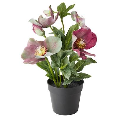 FEJKA artificial potted plant Christmas rose 9 cm 27 cm
