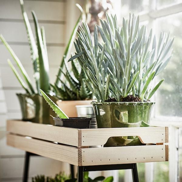 VANILJSTÅNG Plant stand, pine/black, 67 cm