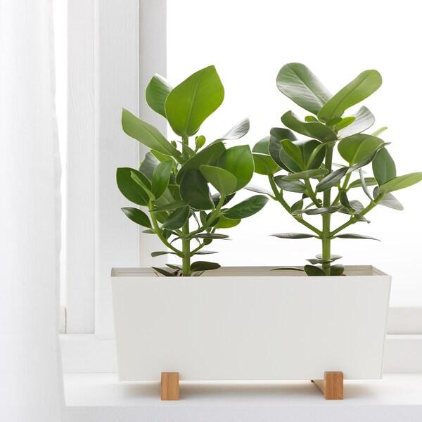 BITTERGURKA آنية نباتات, أبيض, 32x15 سم