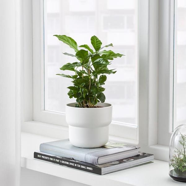FÖRENLIG آنية نباتات, داخلي/خارجي أبيض, 12 سم