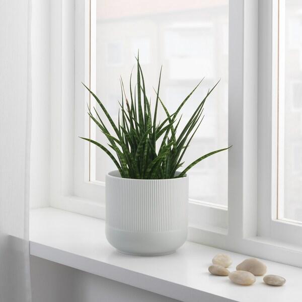 GRADVIS آنية نباتات, رمادي, 15 سم