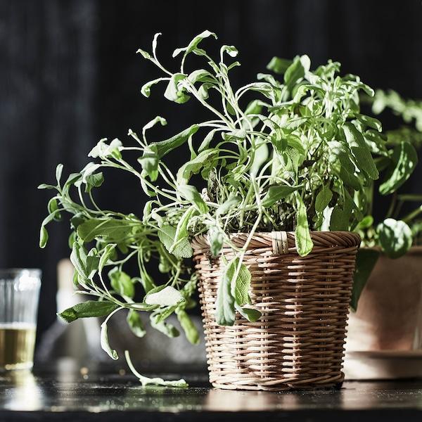 KAKTUSFIKON آنية نباتات, خيزران, 12 سم