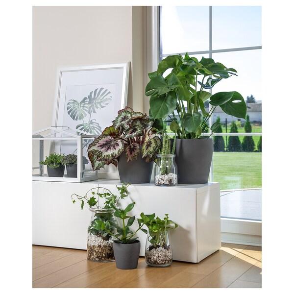 PERSILLADE آنية نباتات, رمادي غامق, 12 سم